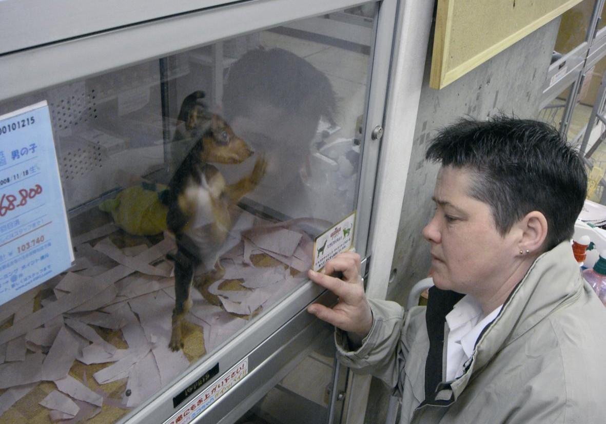 PET SHOP VISIT